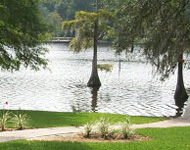 Natural turf grass around a lake in Sydney