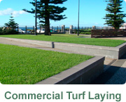 Hi Quality Turf Commercial Turf banner