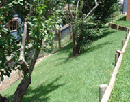 Natural turf grass in your backyard garden